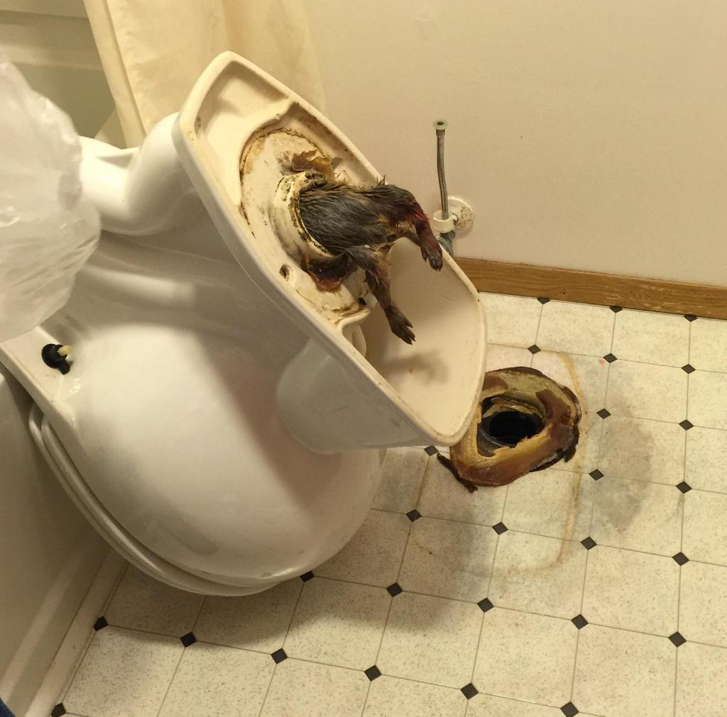 Туалетный утенок порно 18 фотография