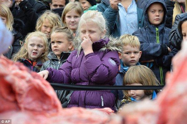 В зоопарке Дании на глазах у детей расчленили льва