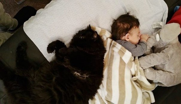 Эта Кошка Охраняет Родившегося Малыша 24 Часа В Сутки 7 Дней В Неделю