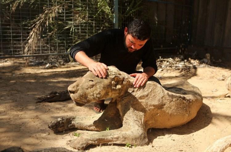 Вернувшись В Зоопарк, Охранники Обнаружили 250 Мертвых Животных! Невероятно